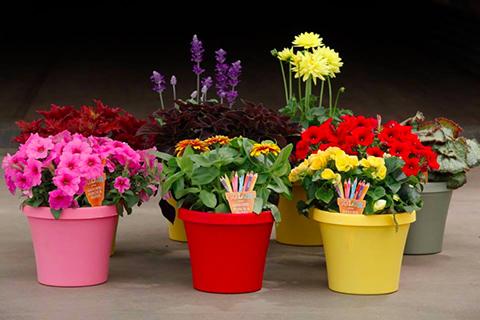 Flowered pots Mill Creek