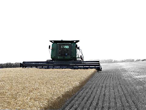 Combine cutting wheat